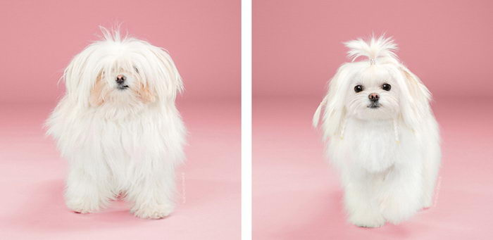 Работы собачьих стилистов в фотографиях Grace Chon
