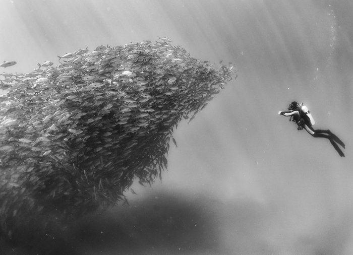 Невероятный подводный мир Anuar Patjane