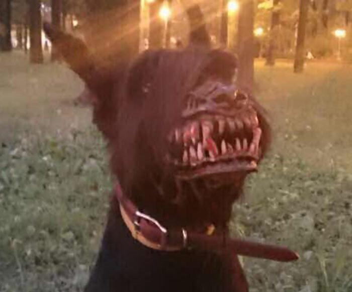 Намордник для собаки, который превратит питомца в оборотня