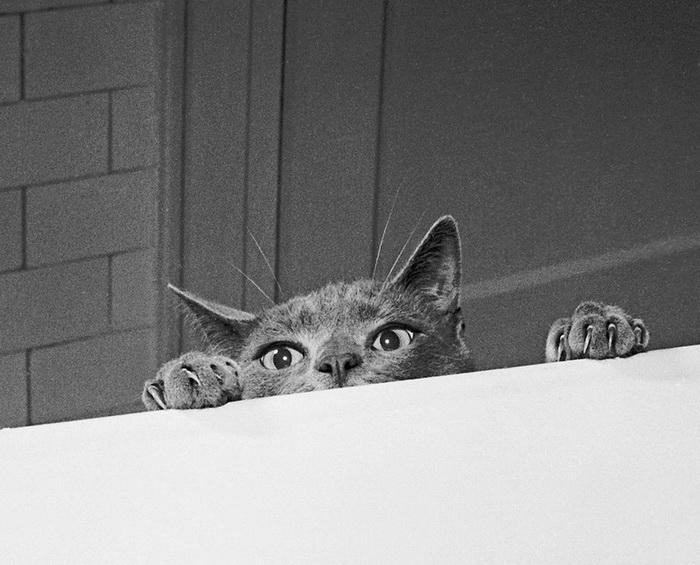 Первый кошачий фотограф Walter George Chandoha