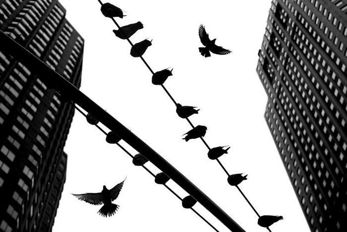 Черно-белая классика Alan Schaller