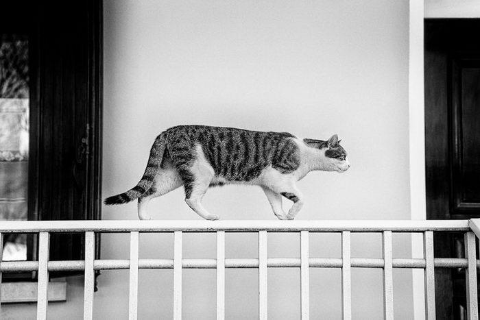 Кошки, которые сидят в неудобных местах: фотопроект Sabrina Boem